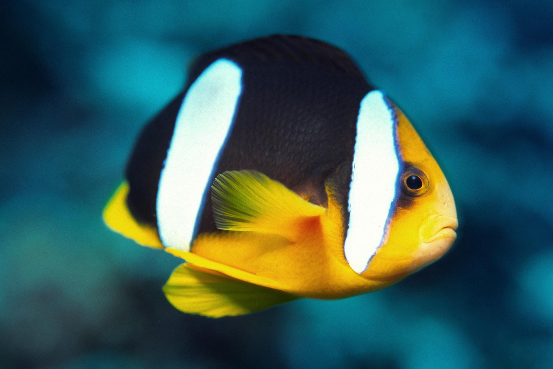 Unterwasser Rifffische