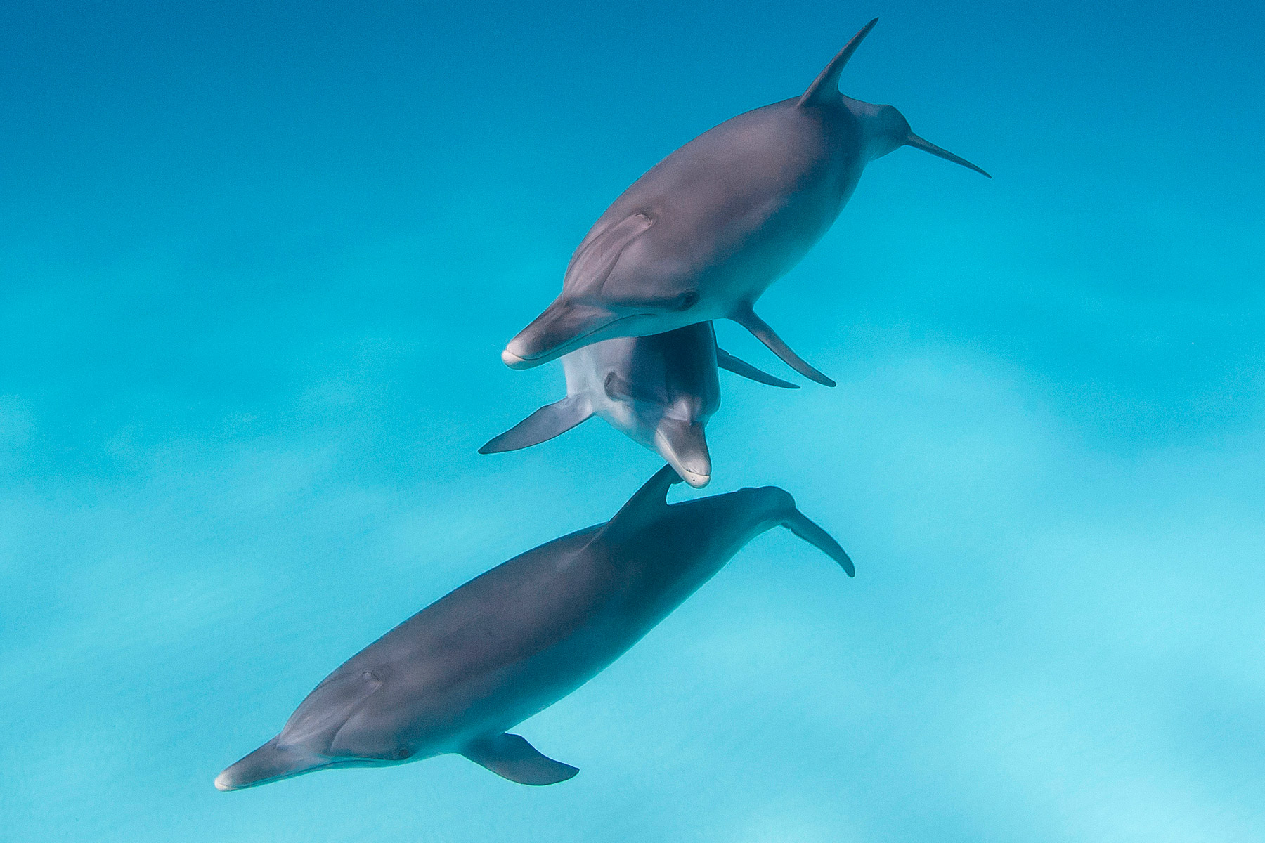 Dolphins - Sea Lions - Cormorant