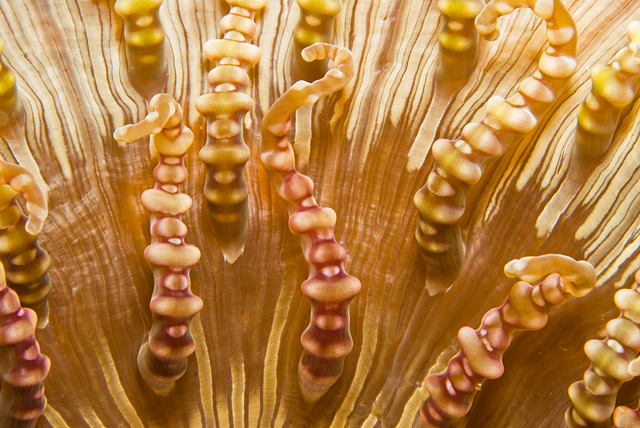 Polyps of a Anemone