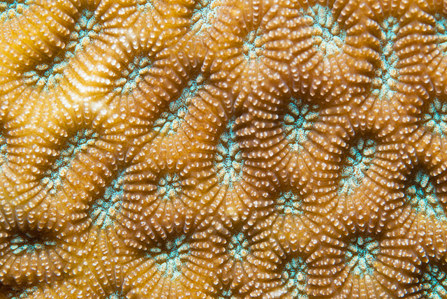 Polyps of a Hard Coral