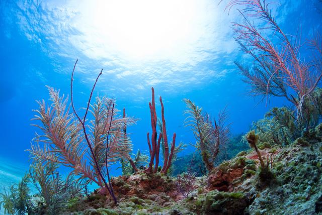 Diverse Soft Corals
