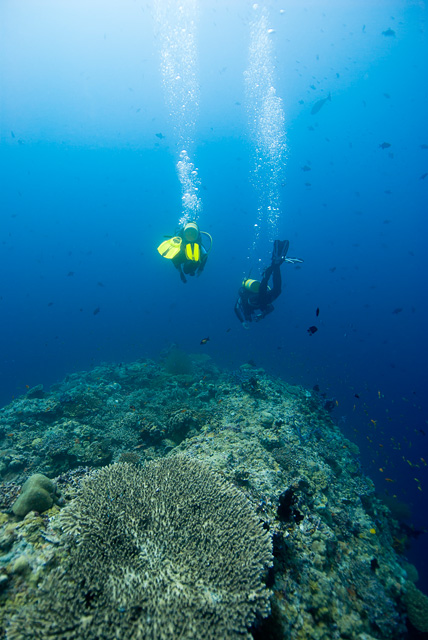 Divers at the Reef