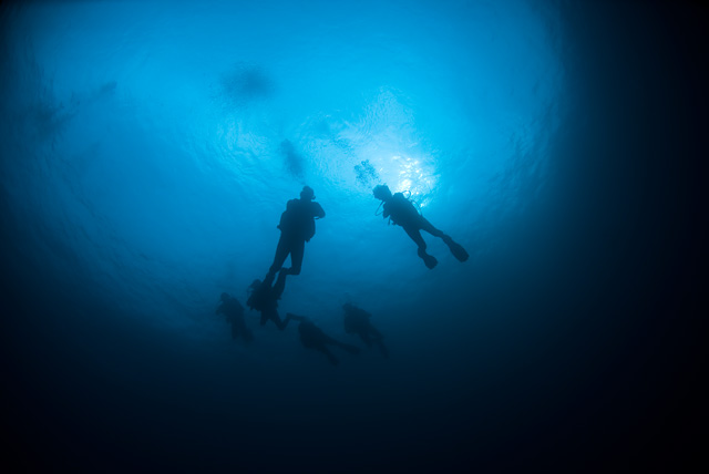 Divers in the Blue Water