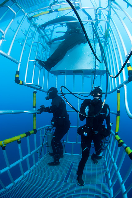 Divers in Shark Cage