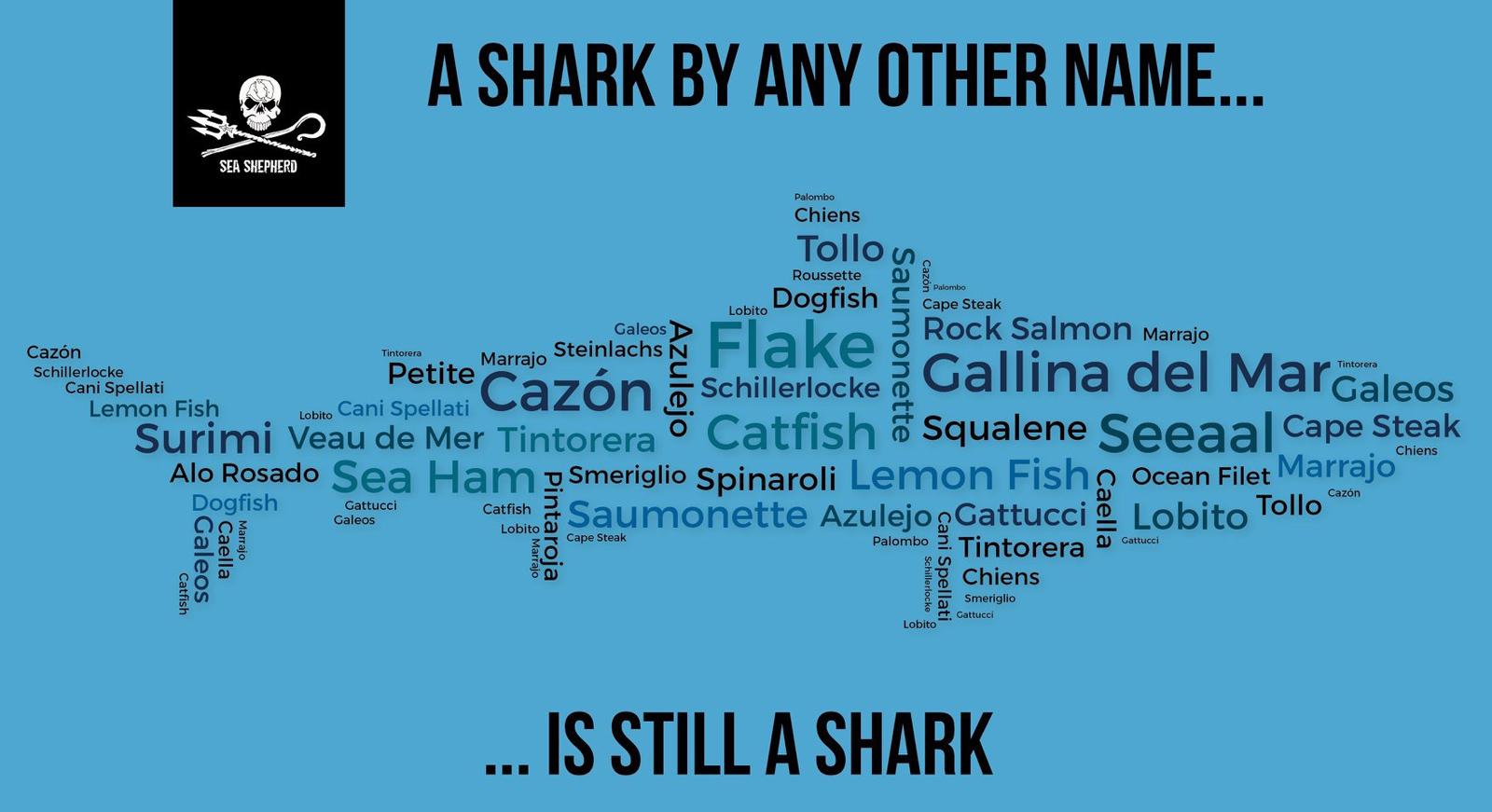 Deceptive Names for Shark Meat | VisionDive